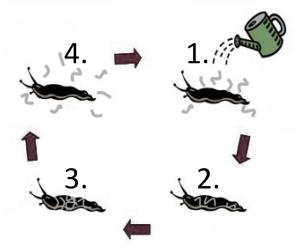 hvordan menatoder fungerer